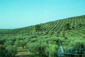 Продава Парцел ПИ - къщи, вили Ватопеди, Гърция